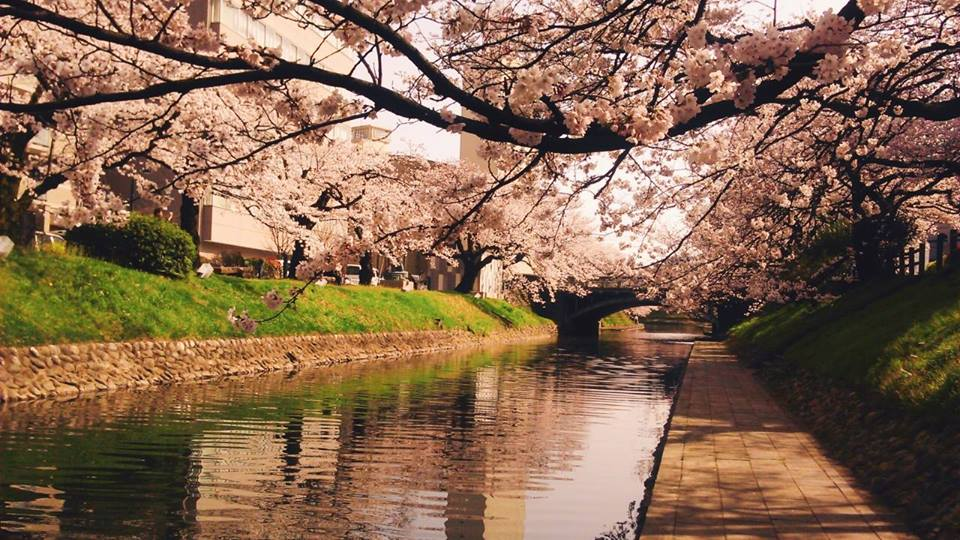 Japan's Off the Beaten Track: 10 Must-See Attractions in Toyama Prefecture